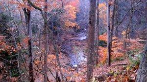 Brandywine Trails